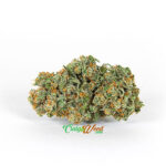 Marijuana-strains-(Jack-Flash)